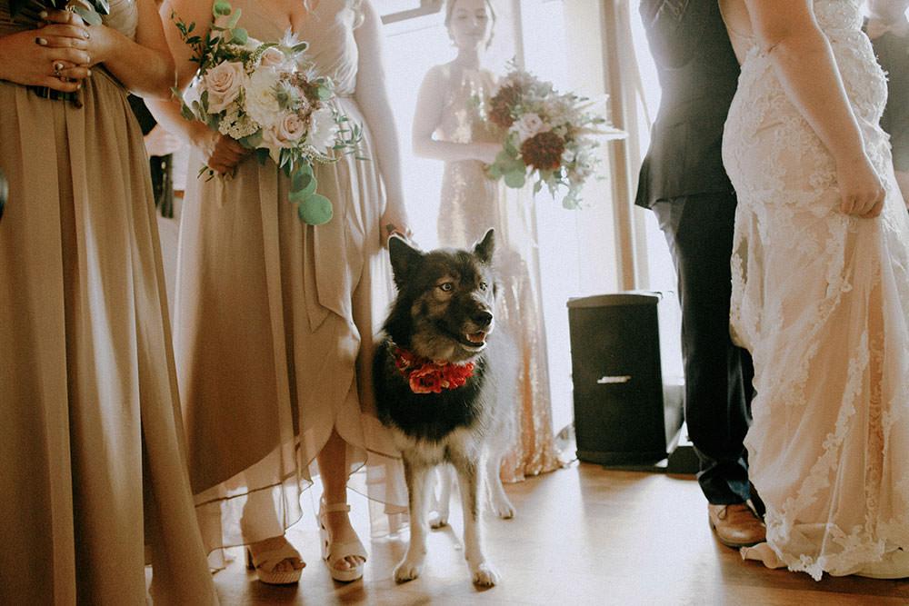 bridesmaid puppy