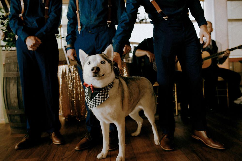groomsmen puppy
